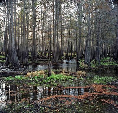 Photograph - Cypress Swamp I. Jane Green Creek. by Chris  Kusik