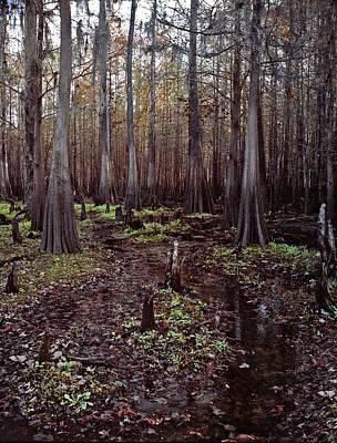 Photograph - Cypress Swamp II. Jane Green Creek. by Chris  Kusik