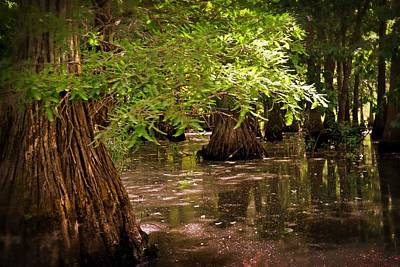 Cypress Swamp Print by Marty Koch