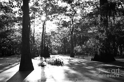 Cypress Swamp Photograph - Cypress Swamp Morning by Thomas R Fletcher