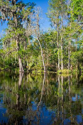 Trees Photograph - Cypress Swamp by Steve Harrington