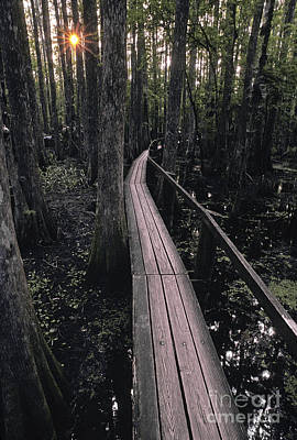 Cypress Swamp Photograph - Cypress Swamp Trail by Ron Sanford