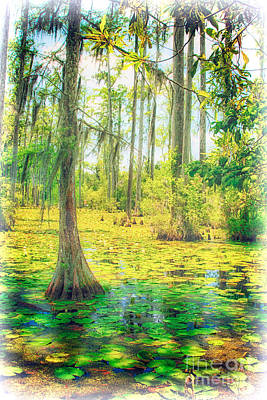Cypress Tree And Water Lilies Art Print by Dan Carmichael