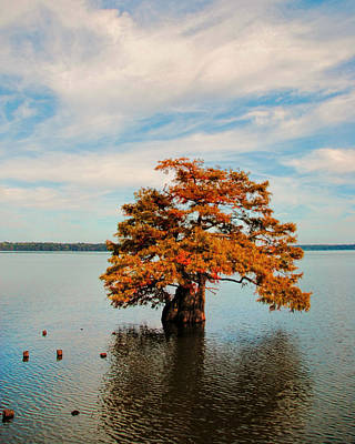 Photograph - Cypress Tree In Autumn II by Jai Johnson