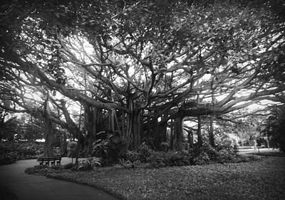 Photograph - Cypress Tree In Black And White by Kelly Hazel