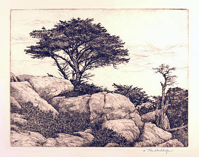 Cypress Tree Drawing - Cypress Tree by Tom Wooldridge