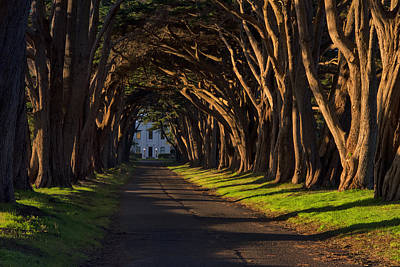 Photograph - Cypress Tree Tunnel by Gej Jones