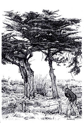 Cypress Tree Drawing - Cypress Trees And A Sneeze by Joseph Juvenal