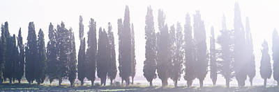 In A Row Photograph - Cypress Trees In A Row, Tuscany, Italy by Panoramic Images