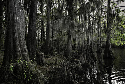Bigfoot Photograph - Cypress Trees by John Hesley