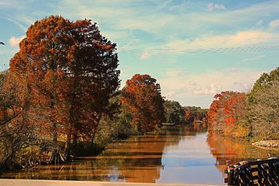 Photograph - Cypress Trees On Bayou Teche New Iberia Louisiana by Ronald Olivier