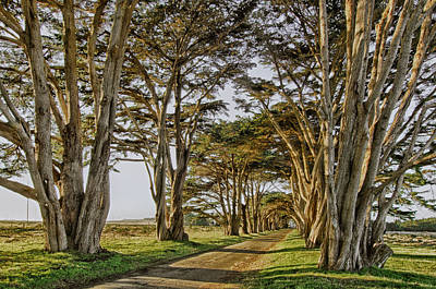 Cypress Tunnel Art Print