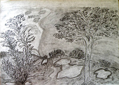 Beach Landscape Drawing - Cypresses In Cyprus by Augusta Stylianou