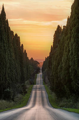 Tuscany Italy Photograph - Cypresses Road by Michele Chiroli