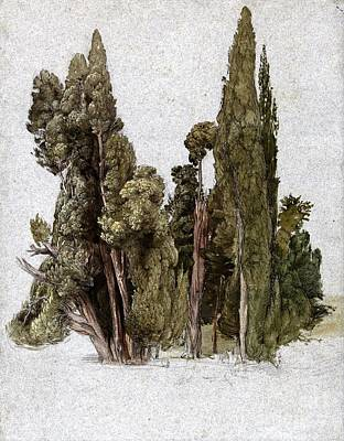 Cypress Tree Drawing - Cypresses Villa D' Este - Tivoli by Pg Reproductions