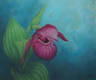 Painting - Cypripedium Macranthos  by Robin Street-Morris