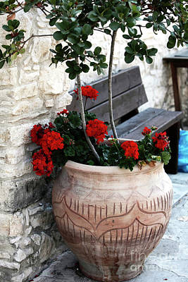 Cypriotic Photograph - Cyprus Flowers by John Rizzuto