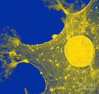 Cytoskeleton, Tem Art Print