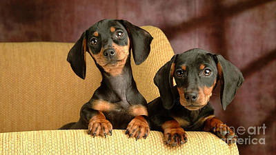 Dachshund Puppy Mixed Media - Dachshund Puppies by Marvin Blaine