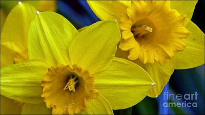 Photograph - Daffies Up Close by Julia Hassett