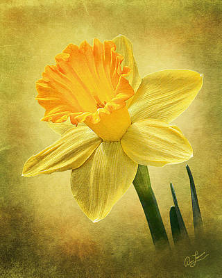 Photograph - Daffodil by Ann Lauwers