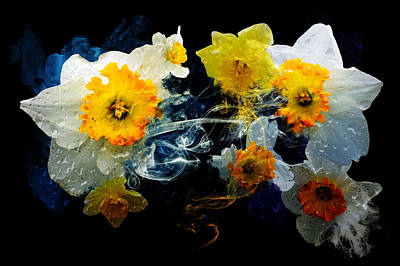 Photograph - Daffodil Beauty by Davina Washington