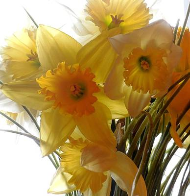 Daffodil Bouquet Art Print