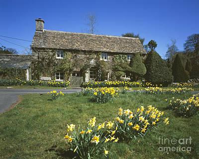 Daffodil Cottage Original