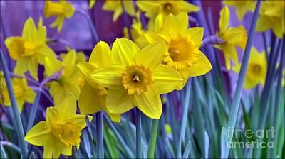 Photograph - Daffodil Dance by Julia Hassett