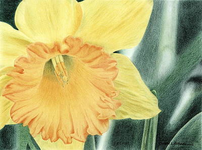 Drawing - Daffodil Dayz by Jennie  Richards