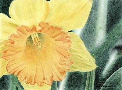 Drawing - Daffodil Dayz by Jennie Richards