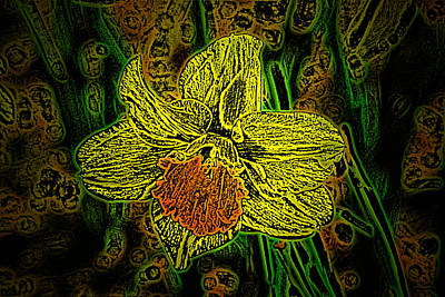 Photograph - Daffodil Doodlings by Tikvah's Hope