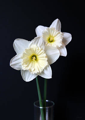Photograph - Daffodil Flowers Still Life by Jennie Marie Schell