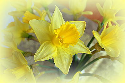 Daffodil Art Print by Bishopston Fine Art