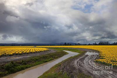 Daffodil Lane Art Print by Mike  Dawson