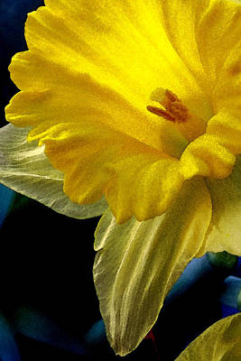 Photograph - Daffodil by Michael Moschogianis