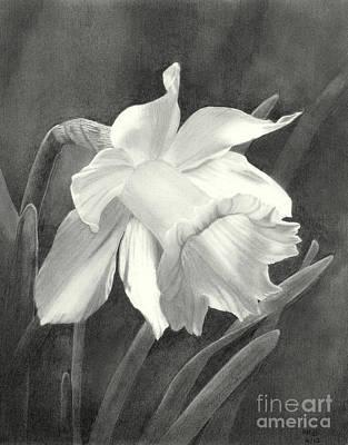 Daffodil Art Print by Nicola Butt