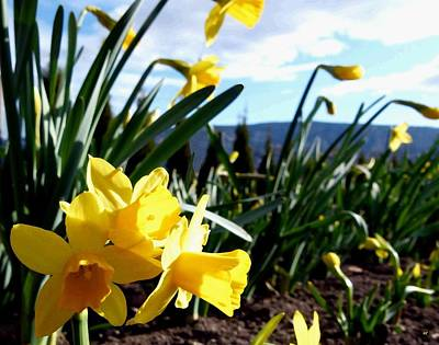 Digital Art - Daffodil Painting by Will Borden