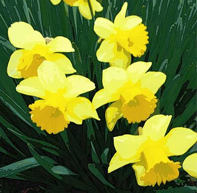 Daffodil Song Art Print by Pamela Hyde Wilson