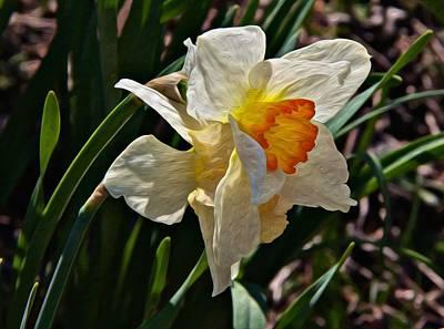 Photograph - Daffodil Splendor by Tom Culver