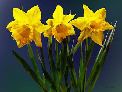 Floral Photograph - Daffodil Trio by Susan Savad