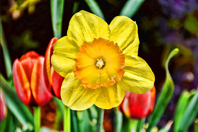 Photograph - Daffodil With Style by Jeanne May