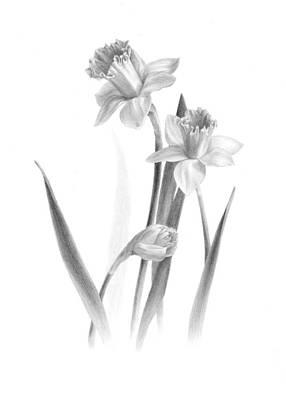 Daffodils Drawing - Daffodils by Diane Cardaci