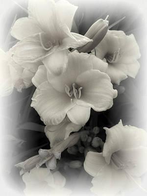 Daffodils Emerge Print by Daniel Hagerman