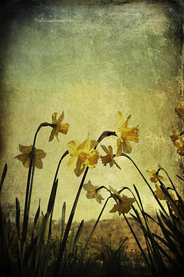 Photograph - Daffodils by Ethiriel  Photography