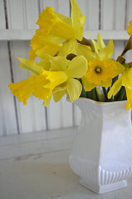 Photograph - Daffodils In Ironstone by Carol Bruno