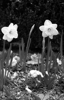 Photograph - Daffodils - Infrared 03 by Pamela Critchlow