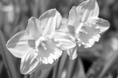 Photograph - Daffodils - Infrared 16 by Pamela Critchlow