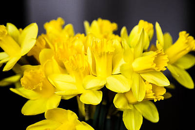 Photograph - Daffodils by Milena Ilieva