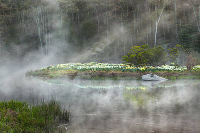 Geese Photograph - Daffodils Of The Fog by Bill Wakeley